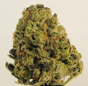 Blue Cookies by Cottonmouth Farms
