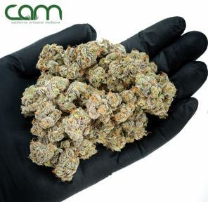 B. Cam 14g Small Flower - Quality 9.5/10 - Haloz (~21% THC)