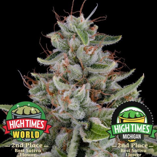 B. Cannabiotix 3.5g Flower - Quality 10/10 - Super SIlver Haze (~28% THC)