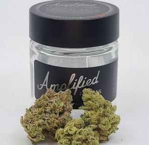 Cereal Milk - 3.5g (THC 27.64%) by Amplified Farms