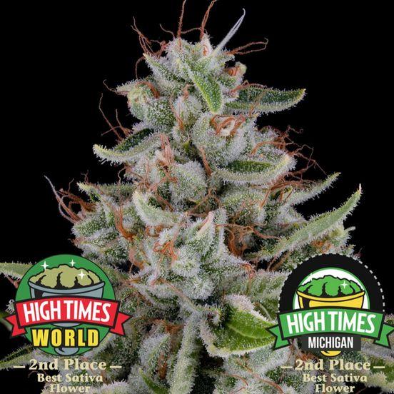 B. Cannabiotix 3.5g Flower - Quality 10/10 - Kush Mountains (~29% THC)